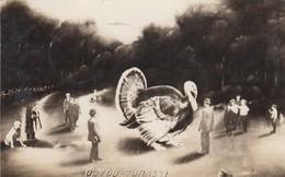 RP: Oh You Turkey? , 1910 - Oiseaux