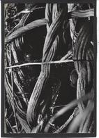 CPSM Guyane Tumuc Humac Expédition Photo D. DARBOIS Non Circulé - Guyane