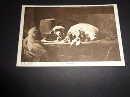 Chiens ( 126 )    Chien    Honden  Hond - Chiens