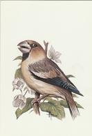 BUZIN.61. GROS BEC - 1985-.. Pájaros (Buzin)