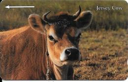 CARTE-MAGNETIQUE-JERSEY-5£-VACHE-JERSEY COW-TBE - Vaches