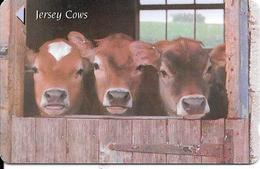 CARTE-MAGNETIQUE-JERSEY-2£-VACHE-JERSEY COWS-TBE - Vaches