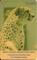 CARTE-MAGNETIQUE-JERSEY-100U-GUEPARD-Fondation JERSEY WILDLIFE -TBE - Jungle