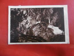 D 39 - Les Planches En Montagne - Gorges De La Langouette - France