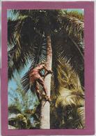 TAHITI .- La Cueillette Des Noix De Coco - Tahiti