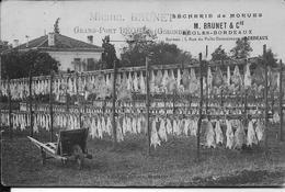 BEGLES BORDEAUX:  Sécheries De Morues M.Brunet - Bordeaux
