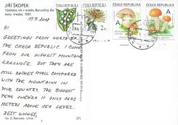 25C : Czech Republic Mushroom And Flower Stamp Used On Violin Music Score Postcard - Czech Republic