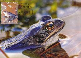 D37665 CARTE MAXIMUM CARD FD 2018 NETHERLANDS - BLUE MOOR FROG GRENOUILLE CP ORIGINAL - Rane
