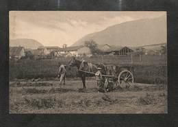 SUISSE - AGRICULTURE - GENEVE - ATAR - Ramassage Du Foin - RARE - GE Ginevra