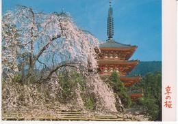 °°° 13458 - JAPAN - KYOTO - CHERRY BLOSSOMS AT DAIGOJI TEMPLE - 1977 With Stamps °°° - Kyoto