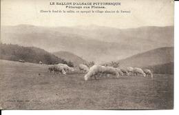 68 - Ballon D'Alsace - Pâturage Aux Plaines - Francia