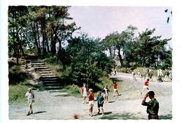 De Haan - Het Bosje - Coq - Le Petit Bois - De Haan