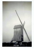 BREDENE - Kleine Foto 9 X 6 Cm -  Molen - Omgewaaid Voorjaar 1951 - Bredene