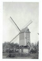 BREDENE - Kleine Foto 9 X 6 Cm -  Molen In De Duinen Ten Z-W Bredene Eig.Kind Hubert - In 1951 Nog Overeind Zonder Kruis - Bredene