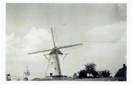 TIEGEM - Anzegem - Kleine Foto 9 X 6 Cm - Stampers Molen - Anzegem