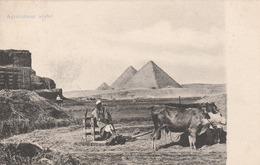 Egypte - Agriculteur Arabe - Scan Recto-verso - Ägypten