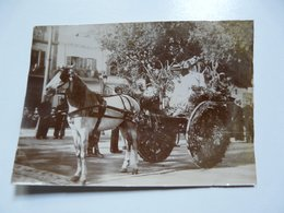 PHOTOGRAPHIE ANCIENNE - TUNIS : Fête Du Printemps Juin 1902 - Deuxième Prix - Anonyme Personen