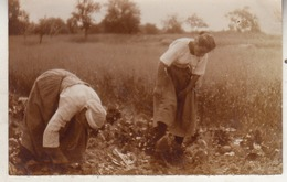 Laboureurs - Landbouwers - 1915 - Photo 5.5 X 8.5 Cm - Personnes Anonymes