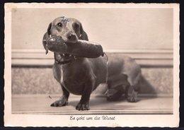 VIEILLE CARTE PHOTO CHIEN TECKEL Avec Saucisse - DACKEL Mit Wurst  - DACHSHUND - Dogs