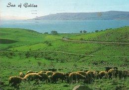 PEACEFUL LAKE OF GALILEE- VIAGGIATA 1965 - Israele