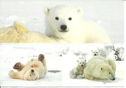 Sweden 2010 WWF - Polar Bear, Ice Bear, Big Card, Used - Suède