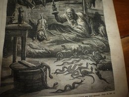 1882 JDV: Gravure --->Le Chasseur De Vipères (récit De B. H. Révoil); Les Richesses Du Paraguay; Etc - Kranten