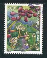 """TIMBRE Oblit. De 2012 """"180 F - Arbuste : Amborella Trichopoda"""" - New Caledonia"""