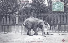 75 - PARIS 05 - Jardin Des Plantes - Le Petit Elephant - District 05