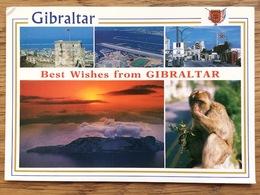 Best Withes From Gibraltar, Monkey, Unused - Gibraltar
