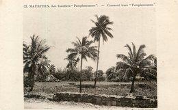 ILE MAURICE(ARBRE) COCOTIER - Mauritius