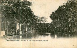 ILE MAURICE(ARBRE) - Mauritius