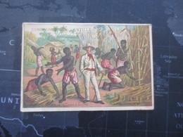 Chromo Publicitaire   Compagnie Des Antilles - Pubblicitari