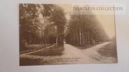 D166484   Notre-Dame Au Bois Jezus Eik Overijse - Avenue Des Capucins - Overijse