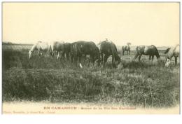 13.EN CAMARGUE.N°39.SCENE DE LA VIE DES GARDIANS.RARE - Francia