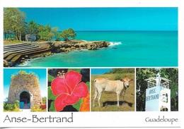 GUADELOUPE - ANSE-BERTRAND - 5 PETITES VUES - CPM - VIERGE - - Guadeloupe