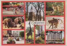 Emmen - (ZOO)   (- Gelopen Met Postzegel) - [AA44-2.327 - Paesi Bassi