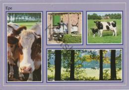 Epe - Koeien   (- Gelopen Met Postzegel) - [AA44-2.449 - Netherlands
