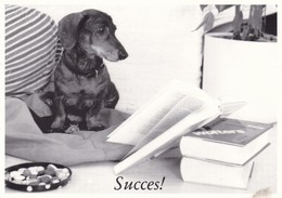 Dackel Teckel  Dachshund  Chien    Modern Postcard - Dogs