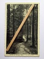 ENVIRONS DE GENAPPE «WAYS Vue Dans Le Bois (Édit Lutte- Stanga) - Genappe