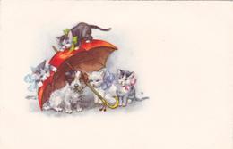 CHAT - 4 CHATONS Avec Noeuds  Et 1 Chiot Fox Sous 1 Parapluie Rouge- Animaux -CHAT -CHIEN-Ecrite - Cats