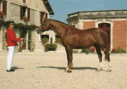 Haras  National  Montier  En Der  4 Cartes - Chevaux