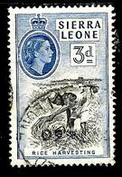 SIERRA LEONE 185° 3d Outremer Elisabeth II Récolte Du Riz (10% De La Cote + 0,15) - Sierra Leone (...-1960)