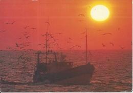 CPM Retour De Pêche En Bretagne Bateaux Et Oiseaux Marins - Pêche