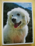 B21 4264 CPM - VUE N° 5 - LE JEUNE PATOU DES PYRENEES. - Dogs