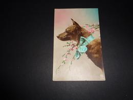 Chien ( 217 )   Hond - Chiens