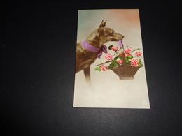 Chien ( 256 )   Hond - Chiens
