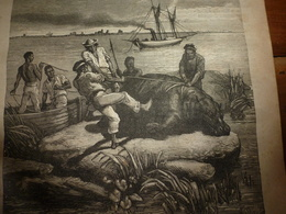 1882 JDV:  Texte Et Gravure:Le Lieutenant Belge Harou Chasse L''hippopotame Au Congo (Zaïre); Grav  Jeu D'éléphants;etc - Kranten