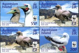 ASCENSION WWF - Oiseau-Fou à Pieds Rouge 4v 2015 Neuf ** MNH - Ascension