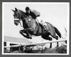 Photo - CHEVAL CHEVAUX HIPPISME - HORSE - CAVALLO - Mrs Bryan Marshal L- Nobbler - Sport