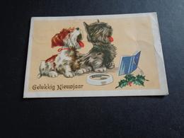 Chiens ( 307 )   Chien  Honden  Hond - Honden
